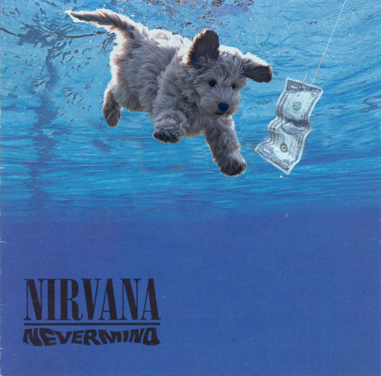 A grunge mozgalomba pontosan egy ilyen cukiság illett volna bele