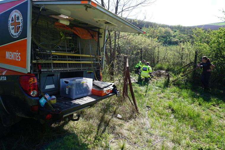 Az egyik Nógrád megyei város, Szente közelében került elég nagy bajba egy róka