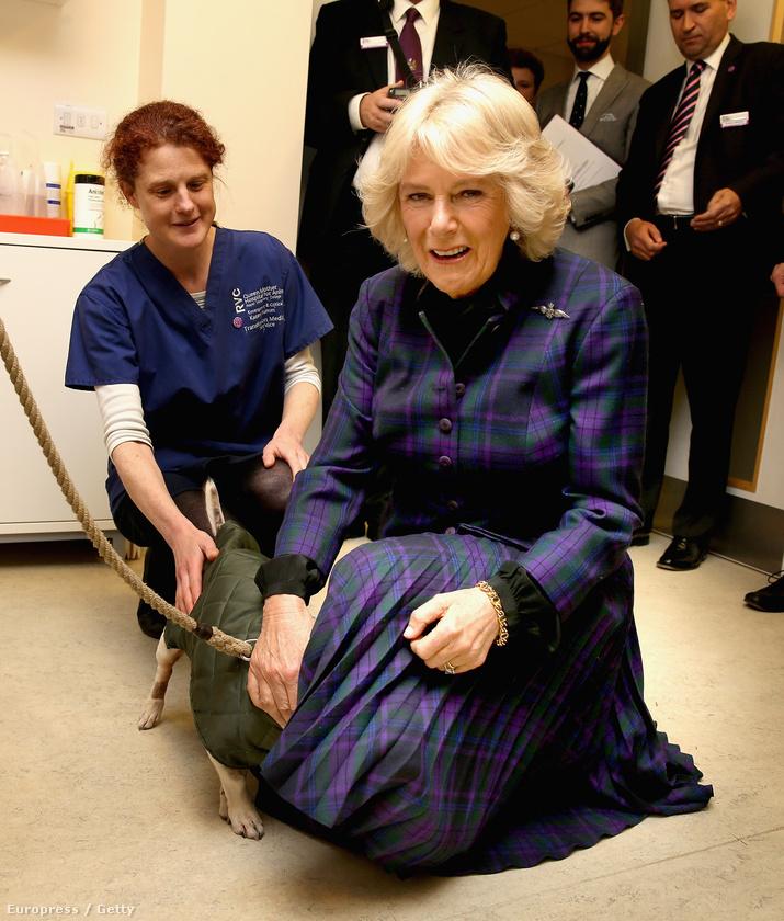 Kamilla hercegné egy hatfieldi állatkórházban járt, aminek az egyik páciense úgy érezte, Károly herceg feleségének ruhája alatt biztonságban lesz