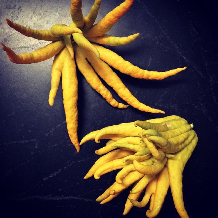 Buddha kezeDe azt is mondhatnánk, hogy ujjas citrom