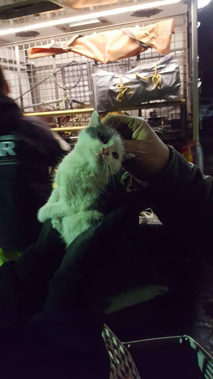 Először megbontották a cső burkolatát, majd egy száloptikás kamerával megkeresték macskákat
