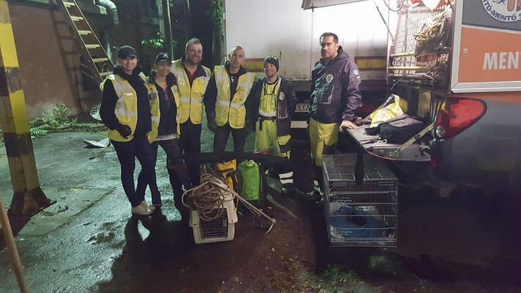 Hála a Pest Megyei Kutató-Mentőknek és a Tetovált Állatmentők Egyesületének, mindenki túlélte