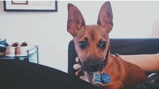 A Reddit                          tele van cuki keverékkutyákkal, a corgi mixek pedig minden bizonnyal a legcukibb lények a Földön