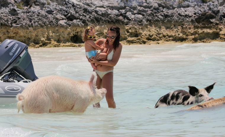 Na de mikor Tamara Ecclestone bikinit villantott, előjöttek a disznók