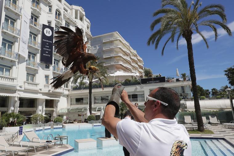Christophe Puzin, hivatásos solymász öt madárral készült, akik megvédik a látogatókat az egyik szállodában