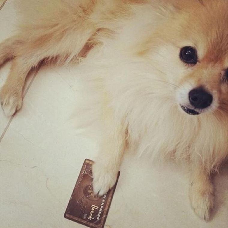 Ahol még a kutyák is hitelkártyával járnak a parkba sétálni