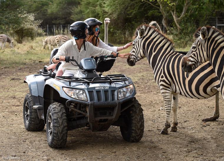 Mert például ön simogatott már zebrát a szerelmével quadozás közben?