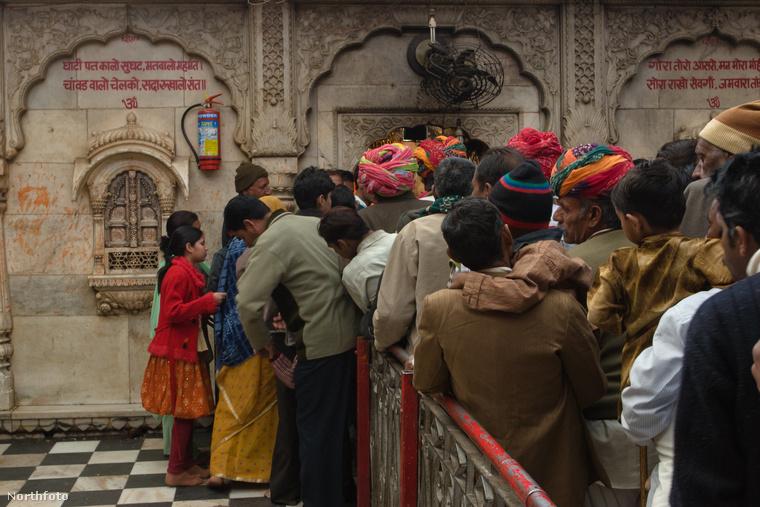 A látogatók hosszú utat képesek bejárni csak azért, hogy közelről megtekintsék és imádják ezeket az állatokat