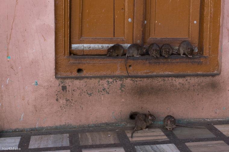 Végül kiegyeztek abban, hogy a fiú és minden halott rokon patkányként térhessen vissza az életbe, ahol addig így élnek, amíg újjá nem születhetnek emberként.