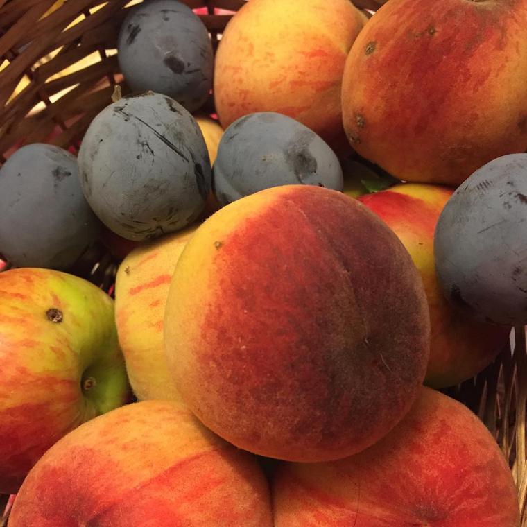Osvárt Andrea ezeket a gyönyörű gyümölcsöket szülővárosában,  Tamásiban kóstolta, körülbelül egy éve