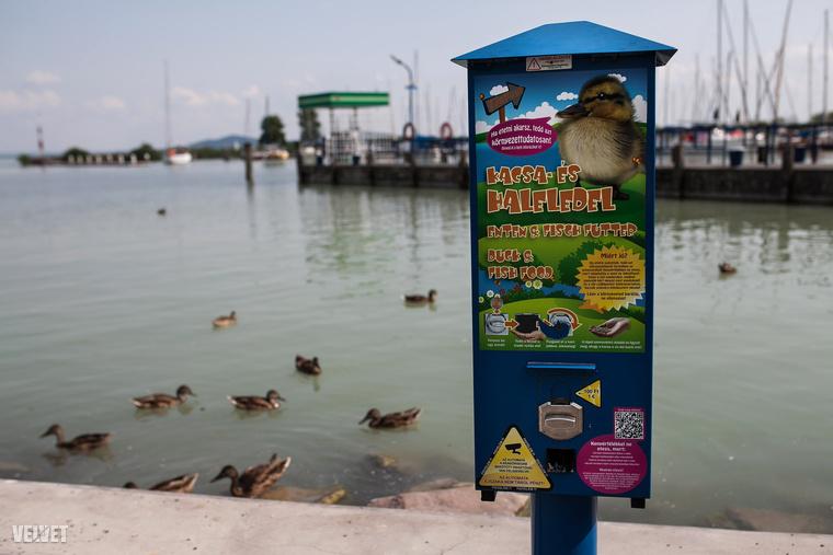 Ezért nagyszerű, hogy a Balaton partján több helyen is elhelyeztek olyan masinákat, melyekből könnyen hozzájuthat direkt kacsáknak szánt eledelhez.
