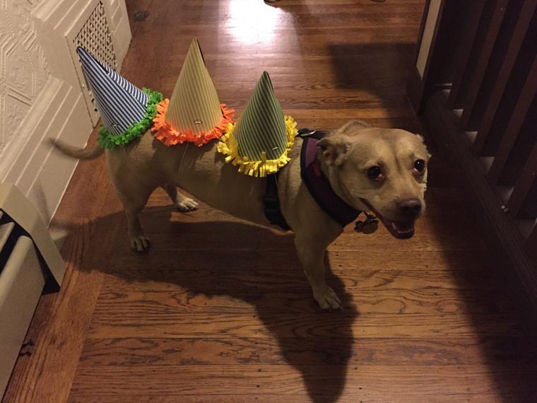 Ebből a szegény kutyából egy átmulatott éjszaka eredményeként lett dinoszaurusz
