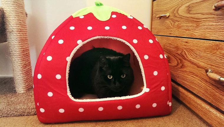 Egy másik cica pedig egy cuki, eper formájú házikóval gazdagodott.