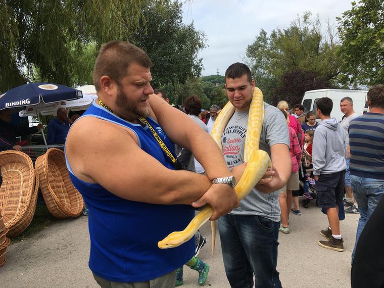 Itt egy ember, aki a nyakába akasztott kígyót bárkire szívesen ráadja egy fotó erejéig