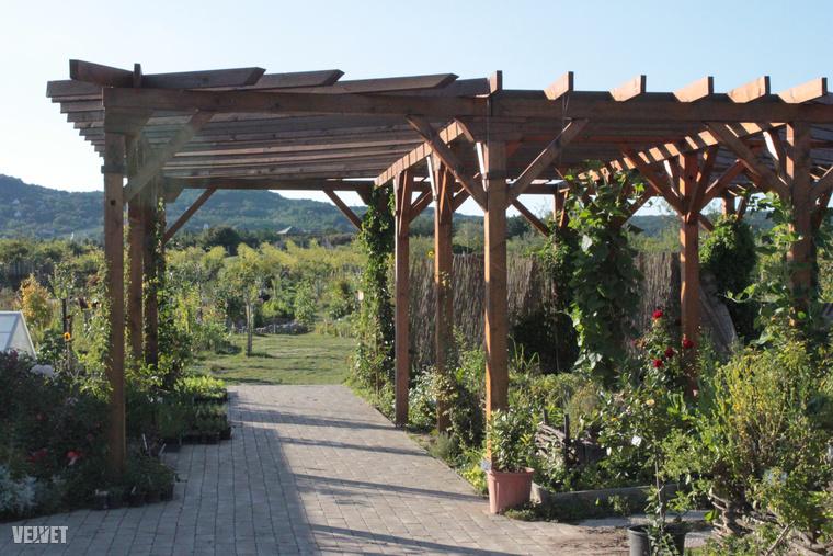 A szabad ég alatt nézegettünk, szagolgathattunk mindenféle és -fajta növényeket.