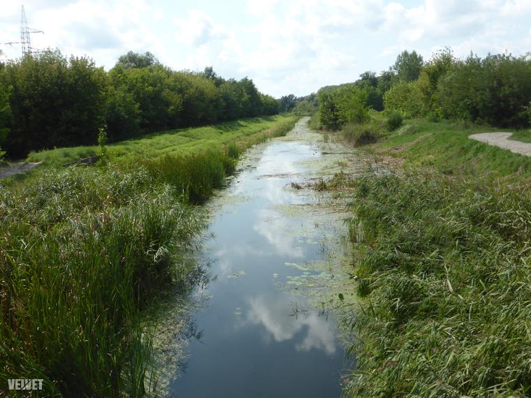 Régen ez a terület volt a berek, de a víz nagy részét lecsapolták, ilyen patakocskák vannak helyettük most már.