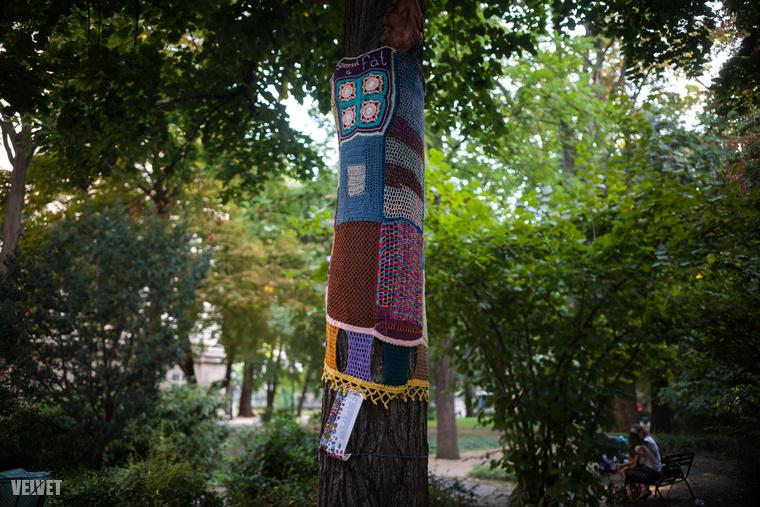 Ez a fa biztos megmenekül, a tervezőiroda a kiemelt történeti, dendrológiai értékű fákat megtartja, ügyel rá