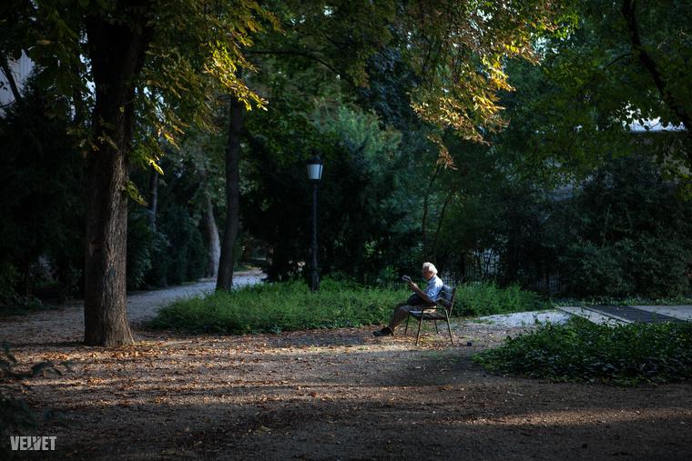A vadan burjánzó növények és gaz helyett új évelő, egynyári virágokat ültetnek, lesznek új padok, új világítás