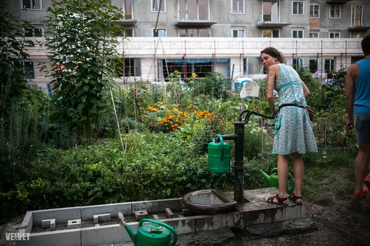 Még nem késő belefogni a kertészkedésbe, ha kedvet kapott hozzá