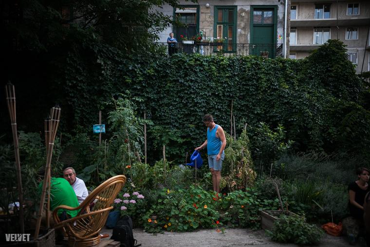 Fűszercsokor kötés, fűszerfelsimerés, origami, betonfestés krétával, kúthúzás, locsolás, kertbejárás, kertész kvíz