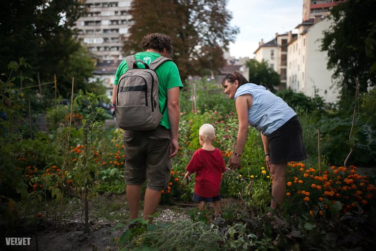 Aki kimaradt, annak nem jutott padlizsánkrém és hummusz, amiket természetesen a kertben termesztett zöldségekkel lehetett mártogatni