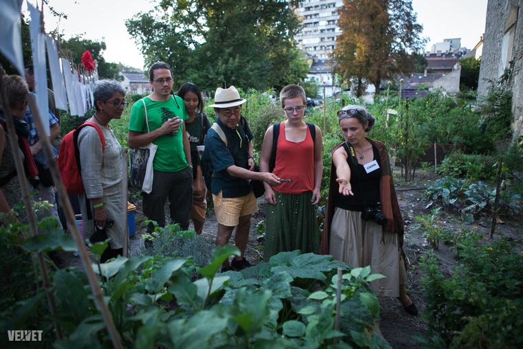 Profi közösségi kertészek, és amatőrök is megnézhették, mi ez az egész