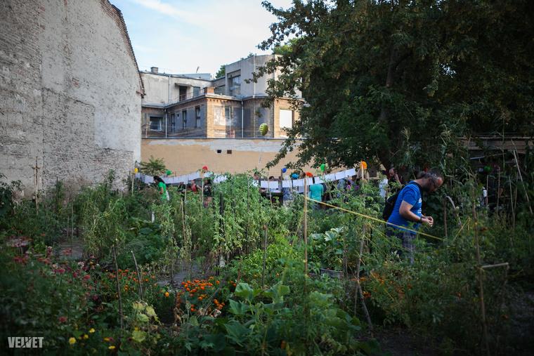Összesen 11 budapesti kert nyitott ki estére
