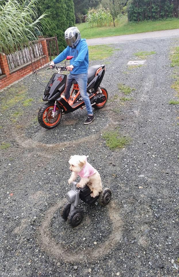 Gyakran motoroznak együtt gazdájával, akit ő csak apunak hív.