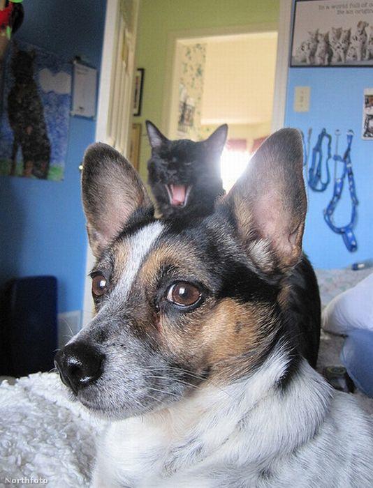 Ilyen például, amikor a háttérben ülő macska úr (vagy hölgy) baromira unja, hogy már a tizenötezredik kép készül el Buksiról