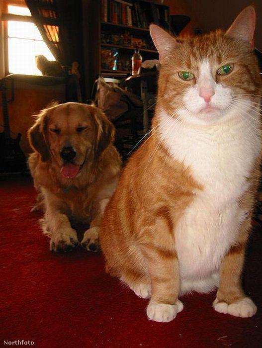 Minden macska tudja, hogy nála csodálatosabb lény nem született még erre a földkerekségre, és ezt meg is mutatja, ha kell, ha nem