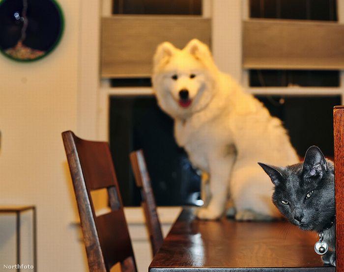 Elárulnád, mi olyan különleges abban, hogy fel tudott mászni az asztalra? Nálam ez mindennapos