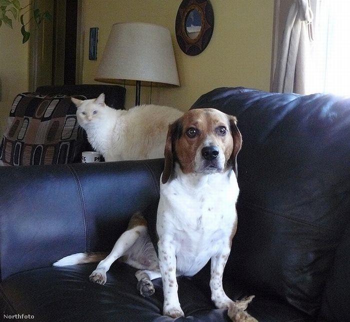Elnézést, csak az iszonyú fontos elfoglaltságaim pont a kanapé tetején át vezetnek!