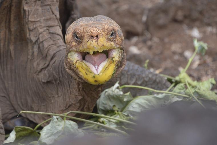 A Föld teljes teknőstársadalma nevében is köszönjük, Diego!