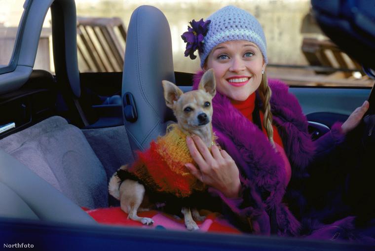 Bár nem a Doktor Szöszi Reese Witherspoon legnagyobb szerepe, azért jó tudni, hogy a kezdő egyetemistát alakító színésznő a 2001-es film forgatása alatt 25 éves volt.