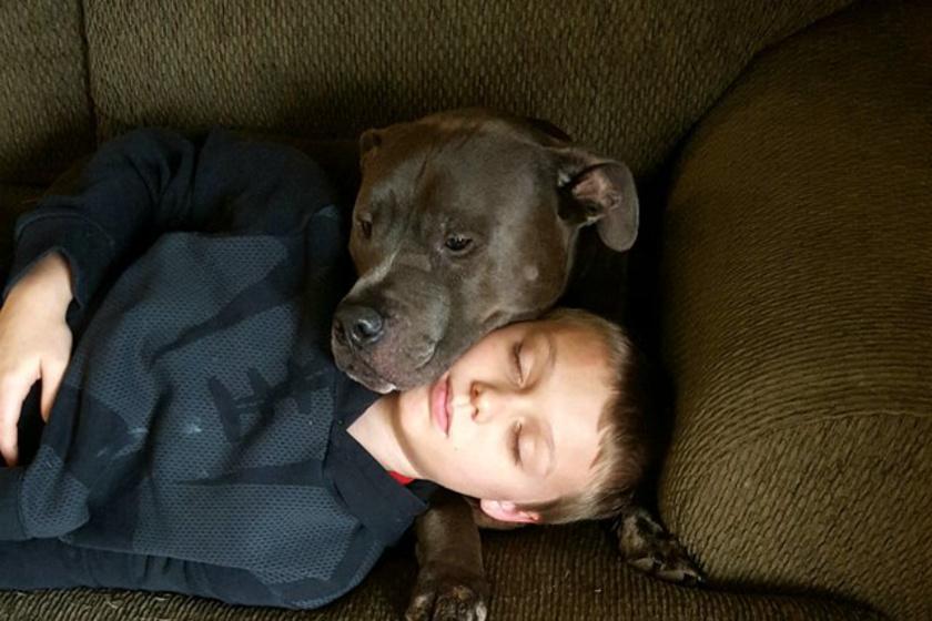 Miért nem alszik a kutya a házában