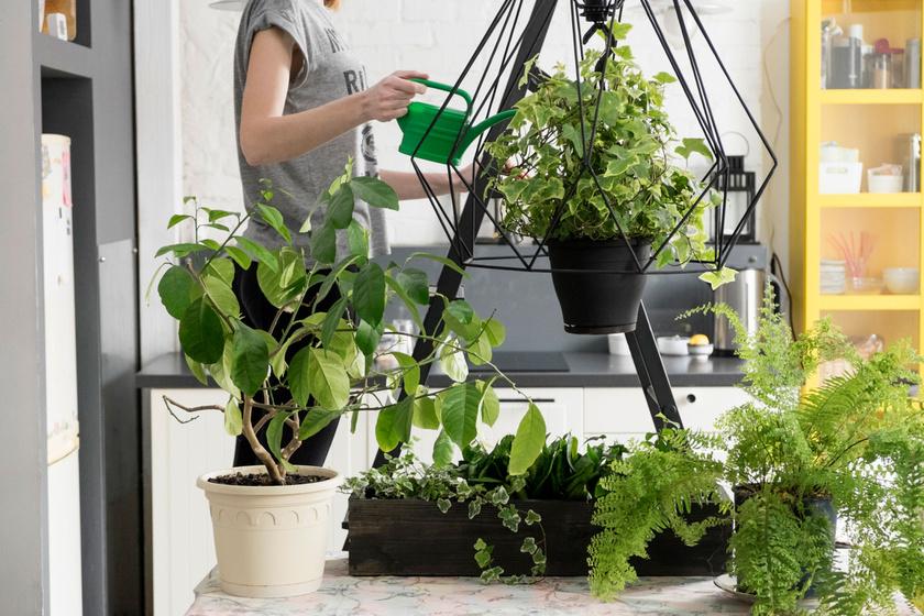 4 jel, hogy a szobanövény megérett az átültetésre: ne halogasd, mert megsínyli