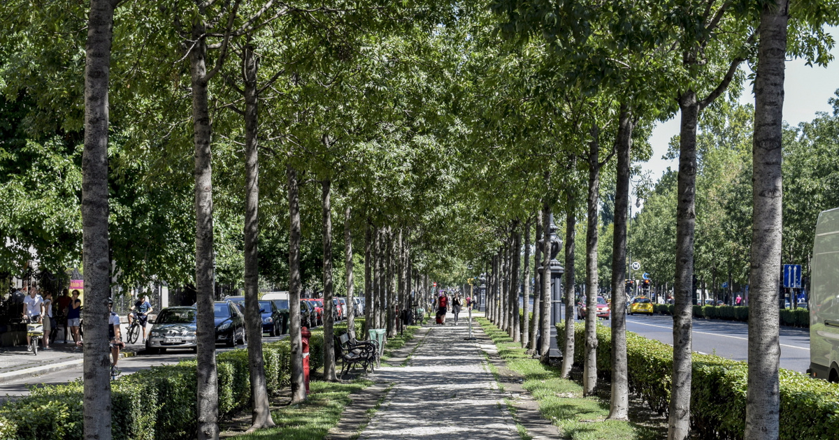 Index – Inland – In the city center half a hundred trees are