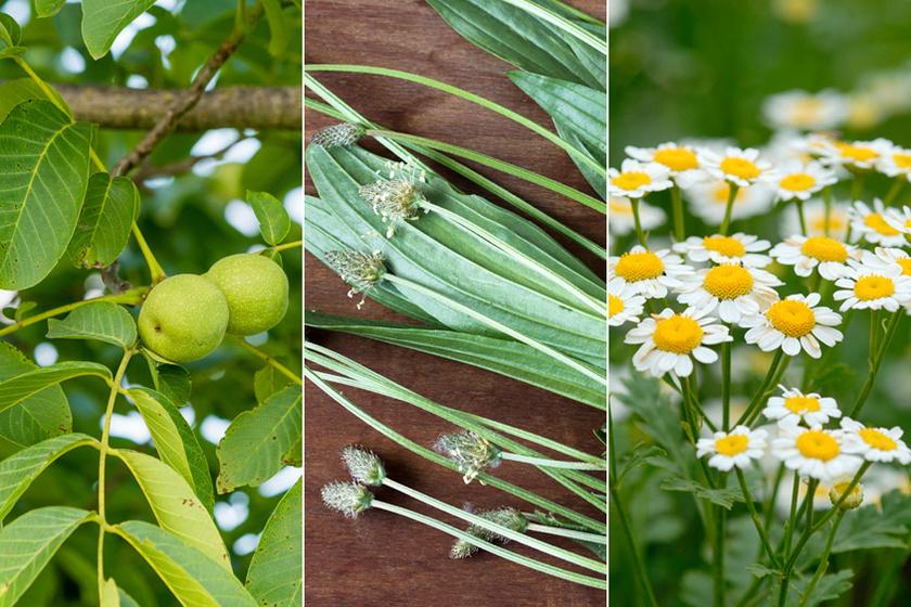 természetes gyógynövények zsírvesztés ellen