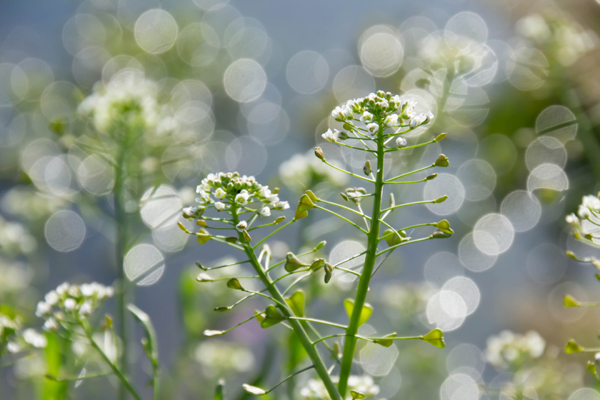 virág magas vérnyomás esetén milyen nedvek a magas vérnyomás ellen