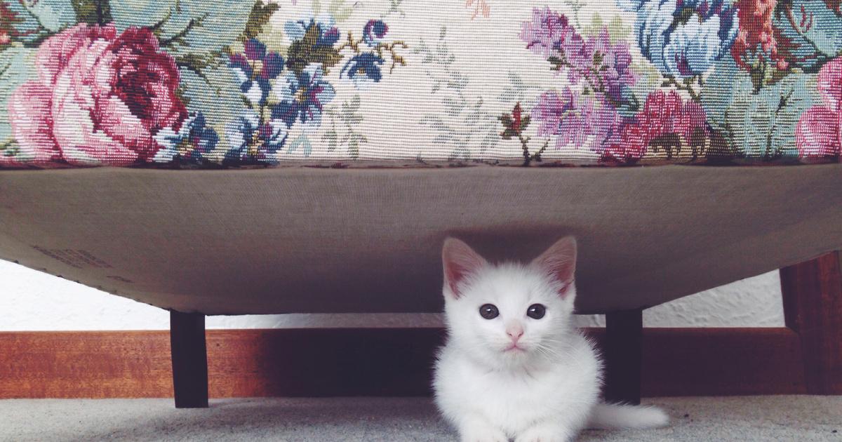 Így segíts az extrém félős cicának, ha idegen érkezik: nem reszket, nem bújik el többé