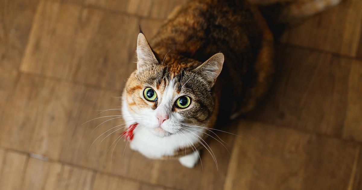 Miért fogy a cicám? | 9722perenye.hu