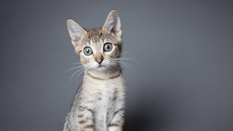 Meleg a macska füle