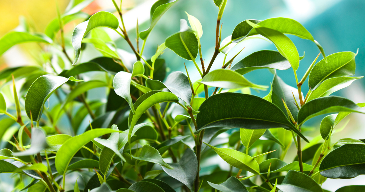 Orrfolyást, tüsszögést okoz ez a 8 szobanövény: sokan nem tudják, hogy allergizálnak