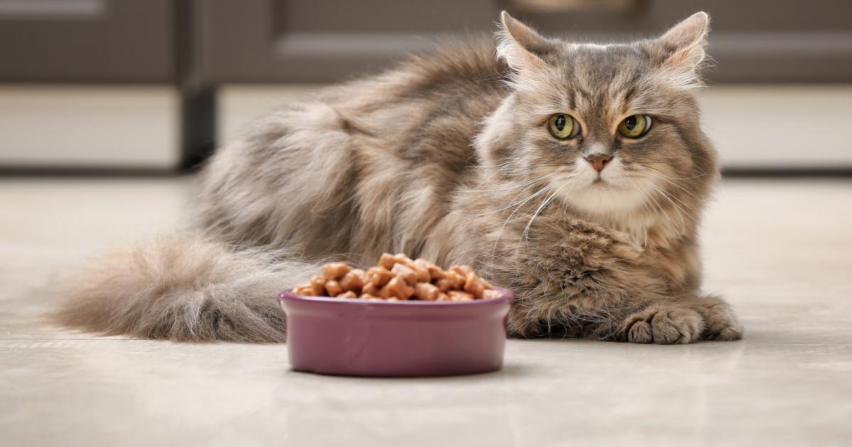 Nem eszik a macska? Az 5 leggyakoribb dolog a tünet hátterében