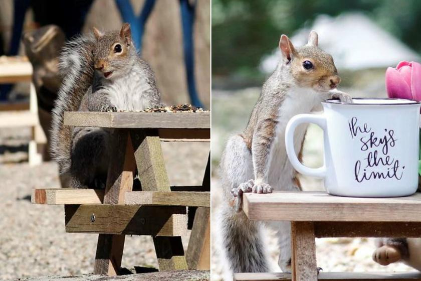 Aprócska székeken ülnek a mókusok a mini asztaloknál: a nő pindurka kávézót épített a kertjébe