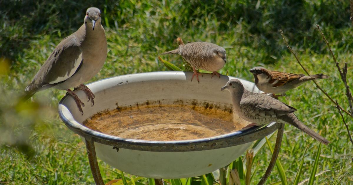 Súlyos pénzbüntetést kapott a nő, mert madarakat etetett a kertjében - Hiába figyelmeztették