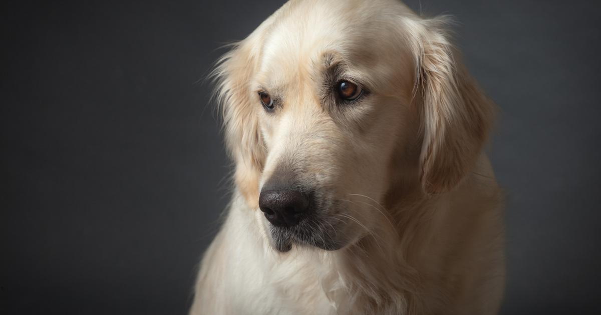 100 kilométert gyalogolt egyedül a kutya, hogy láthassa gazdáját - Megható a története