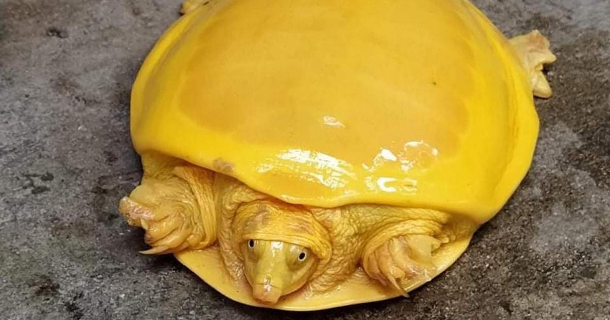 Nagyon ritka, albínó teknőst találtak - Ilyen furcsa állatot ritkán látni