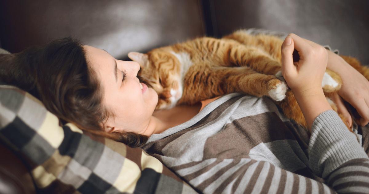 Ezért alszik rajtad a macskád: több ok is állhat a cuki szokás hátterében