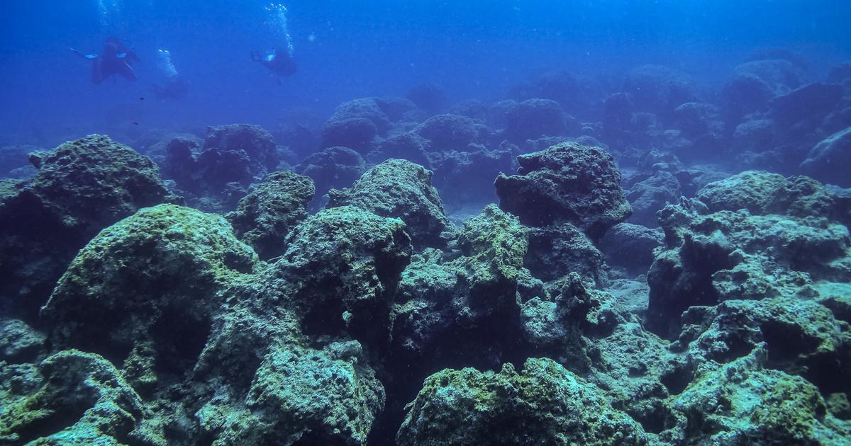 Összeomlóban az őshonos élővilág a Földközi-tenger keleti felében